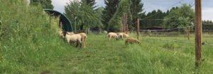 Fleisch und Milch aus Schafen in Pforzheim